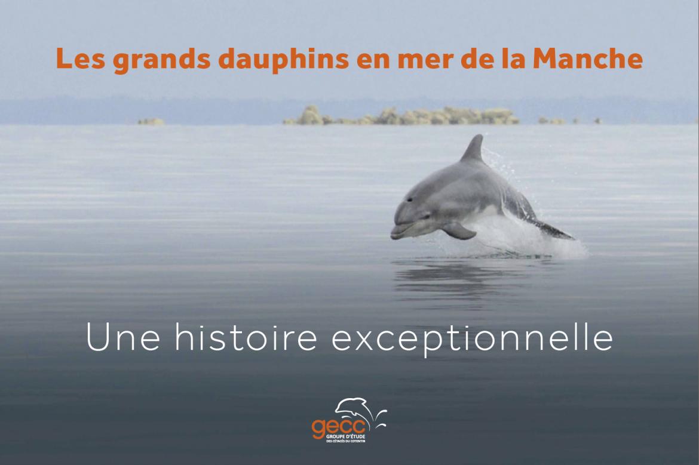 Bien-aimé les grands dauphins en mer de la Manche, plongez dans l'aventure  NF22