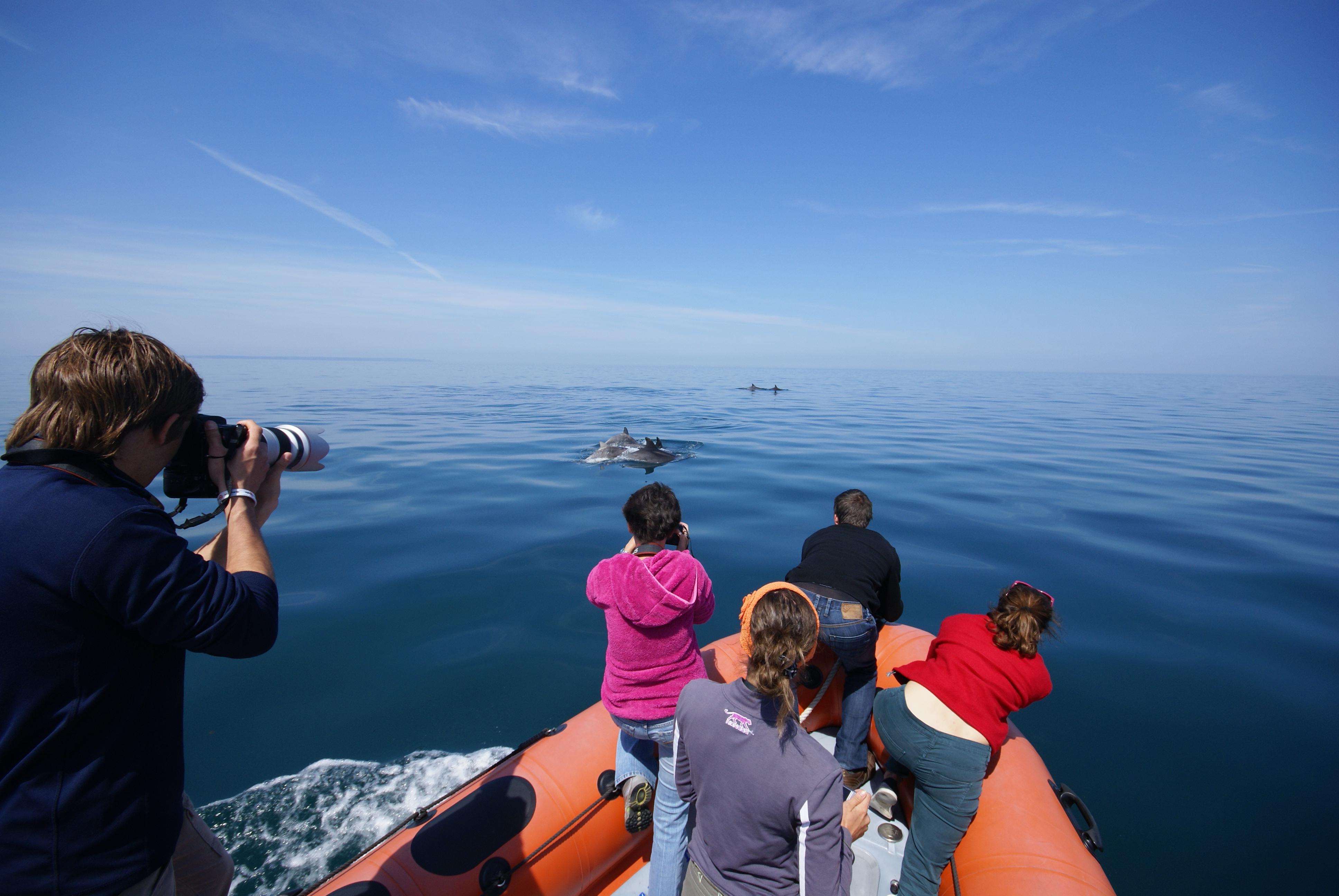 Les grands dauphins vus depuis le Bonaventure. Photo Florent Nicolas pour le GECC