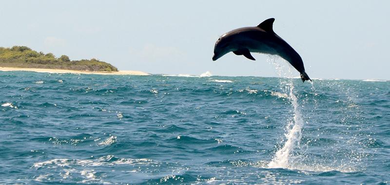 sexe avec un dauphin vidéo